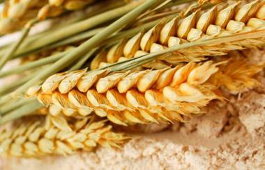 EXP.IDK.RU. Теханализ: рост пшеничных фьючерсов затихает
