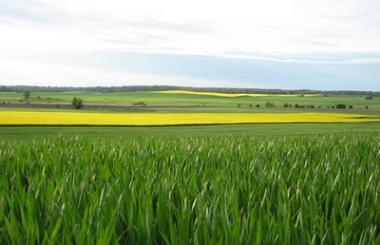 EXP.IDK.RU. Пшеничный рынок в состоянии волатильности