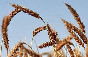 EXP.IDK.RU. Цены на зерно вырастут к концу 2016 года - прогноз Минсельхоза Ростовской области