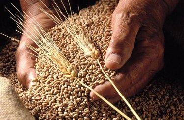 EXP.IDK.RU. Пшеницу побило рублем
