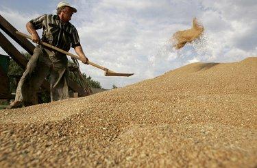 EXP.IDK.RU. Большой урожай зерновых в РФ может обвалить цены