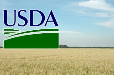 Обзор рынка пшеницы – USDA, май 2017