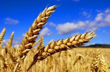Недельный обзор по рынку пшеницы с 29.05.2017 - по 04.06.2017 года