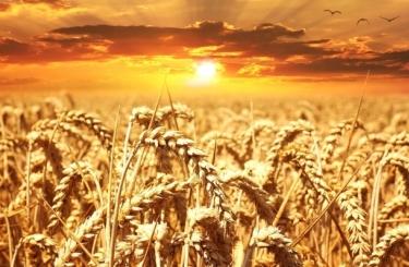 Обзор урожая в Еврозоне. Отчет MARS