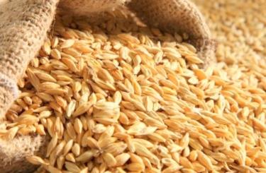 EXP.IDK.RU. Экспортные цены на пшеницу растут на непогоде