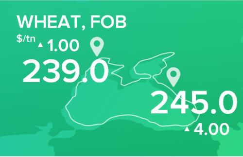Пшеница. Цены FOB. Данные на 21.01.2019