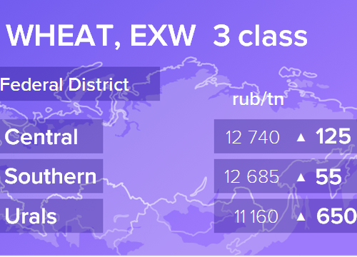 Пшеница. Цены EXW. Россия. Данные на 01.03.2019