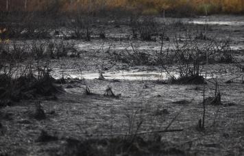 EXP.IDK.RU. Поля с пшеницей в Самарской области уничтожены разлившимися нефтесодержащими продуктами