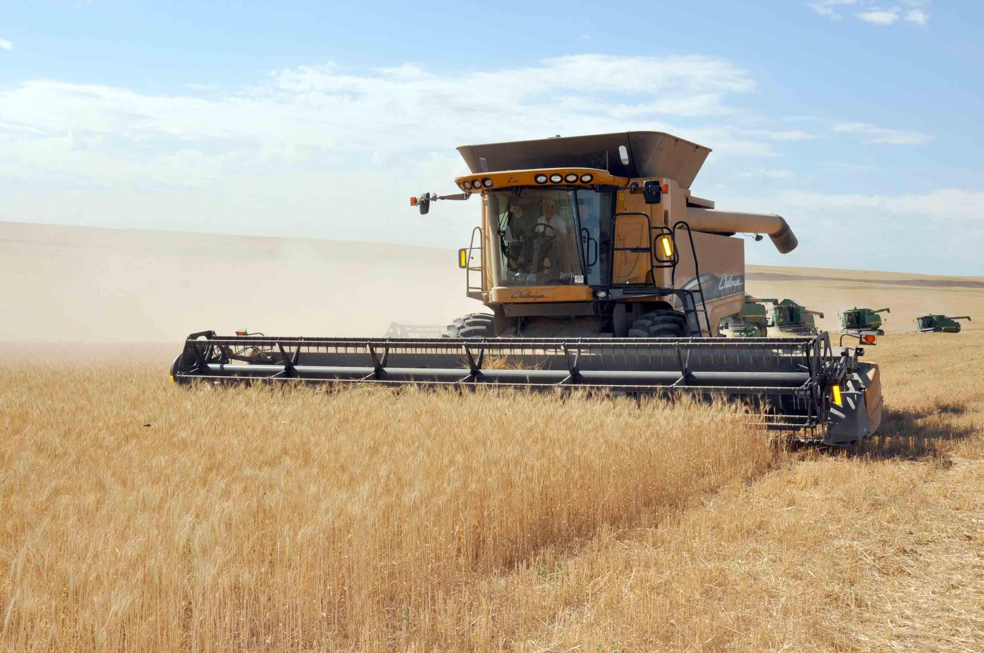 уборка пшеницы комбайнами картинки магазины элитные