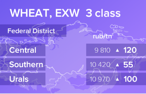 Пшеница. Цены EXW. Россия. Данные на 14.10.2019