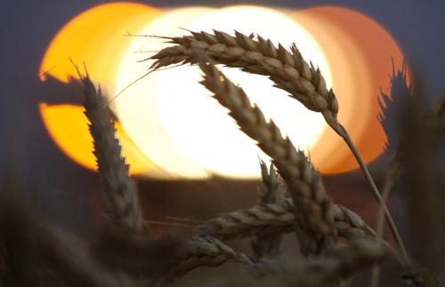 IGC. Отчет о рынке зерновых культур от 29 октября 2020