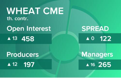Пшеница. Открытый интерес на 31 октября 2020